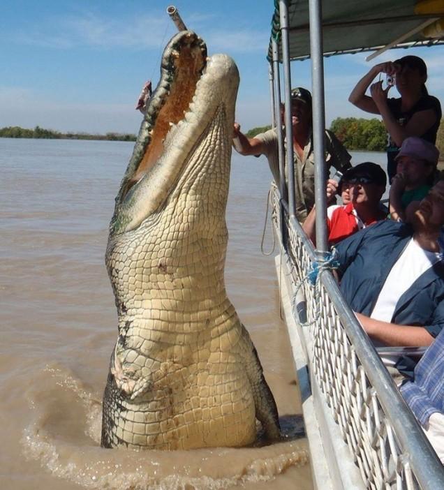 най- големият крокодил