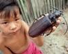 гигантски бръмбар