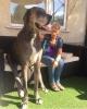 най- голямото куче на света