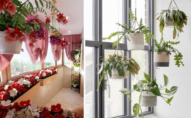 растения у дома