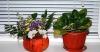 стайни растения