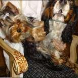 Мария с любимите кучета