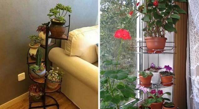 идеи за цветя у дома