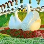 цветна градина Дубай