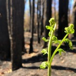пожарите в Австралия нови снимки