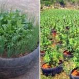 растения в гуми