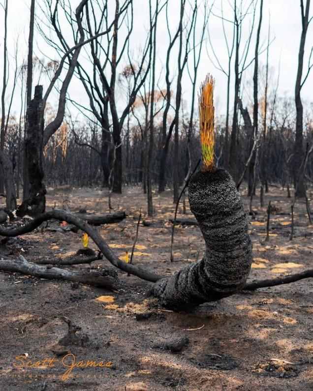 Има ли още пожари в Австралия