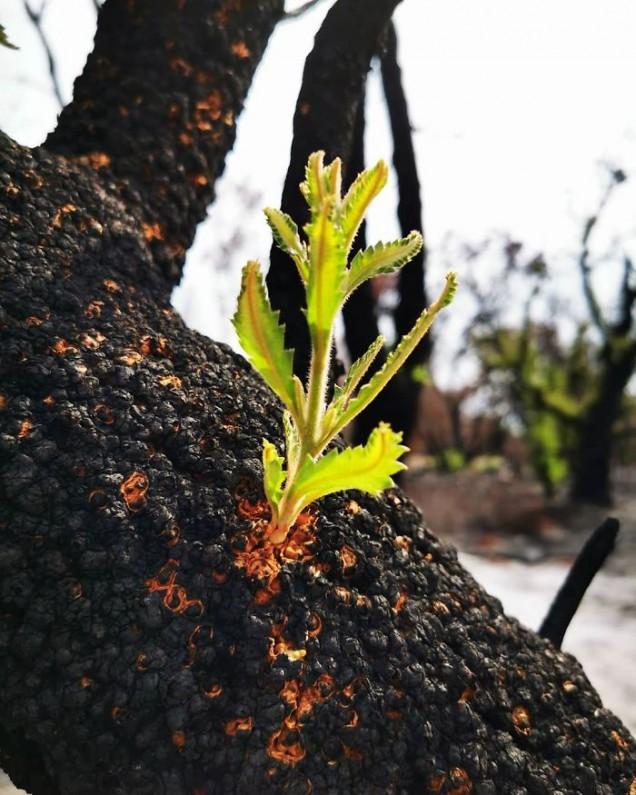 Как изглеждат горите след пожарите в Австралия