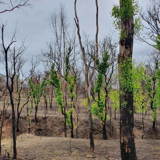 Снимки от пожарите в Австралия