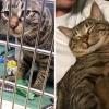 осиновено коте от приют