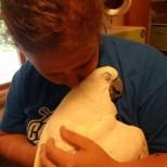 любов към животните