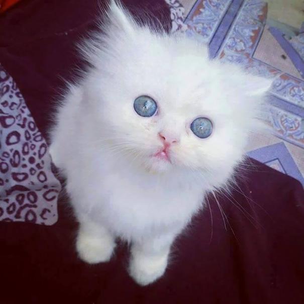 бяло коте