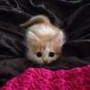 мило котенце
