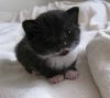 бебе коте