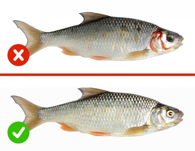 проверка на риба