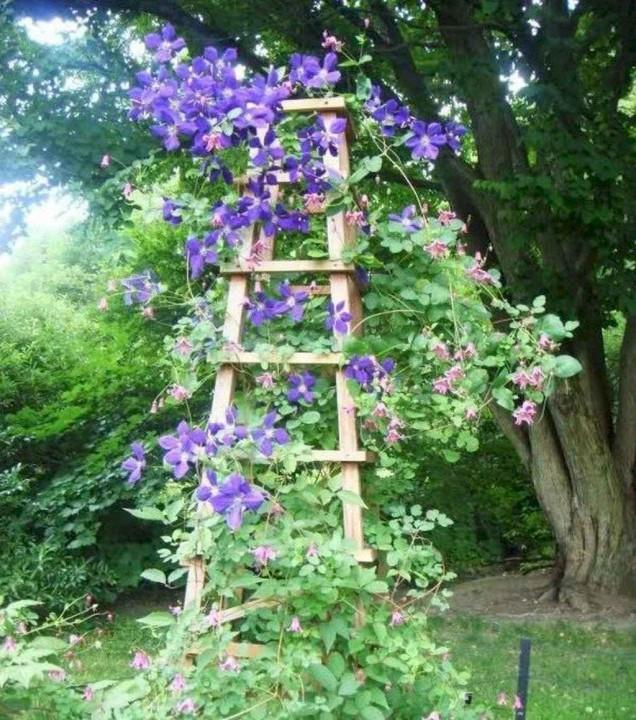 цветарник от стара стълба
