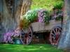 цветя в каручка