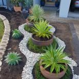 растения в двора