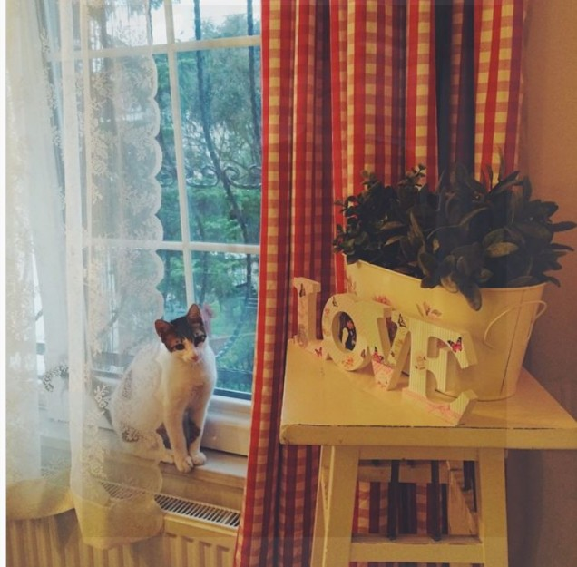 Бергюзар Корел коте