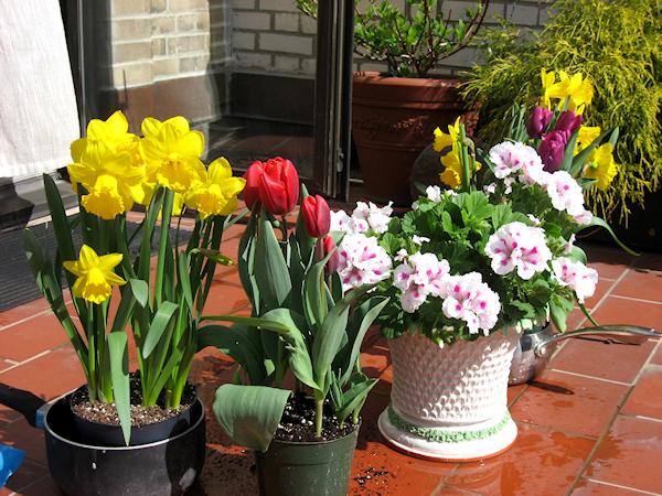 Пролетни цветя на балкона