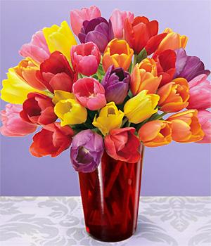 Букет разноцветни лалета в червена ваза