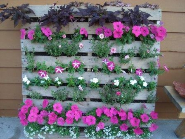 Как да си наредим цветята в градината на стар палет
