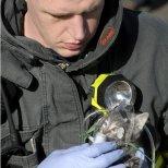 Пожарникар дава кислород на коте