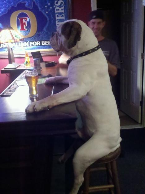 Куче седи в бар