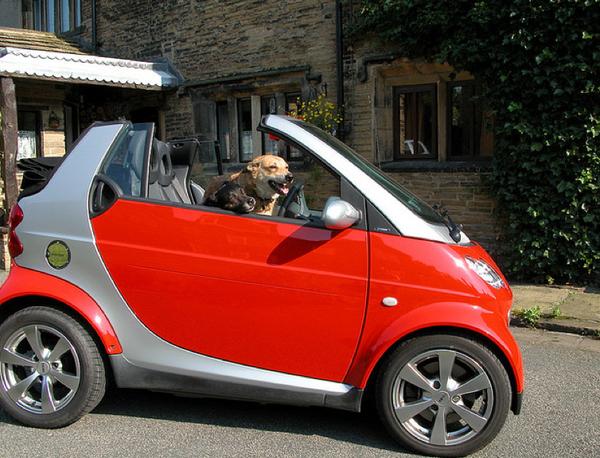 Куче управлява - Smart