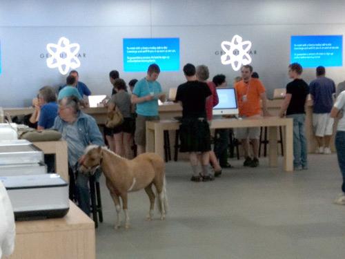 Мини кон в магазина на Apple