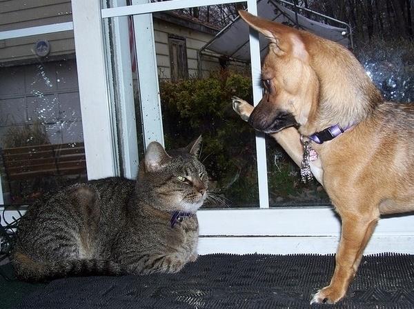Кучето се опитва да получи пет от котка