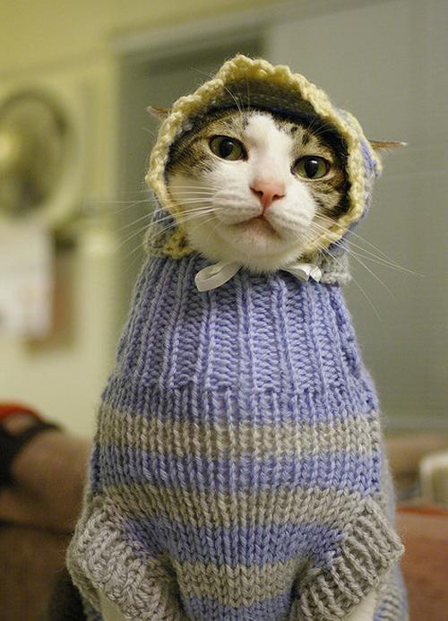 Тази котка носи пуловер