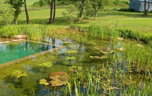 Езеро в двора