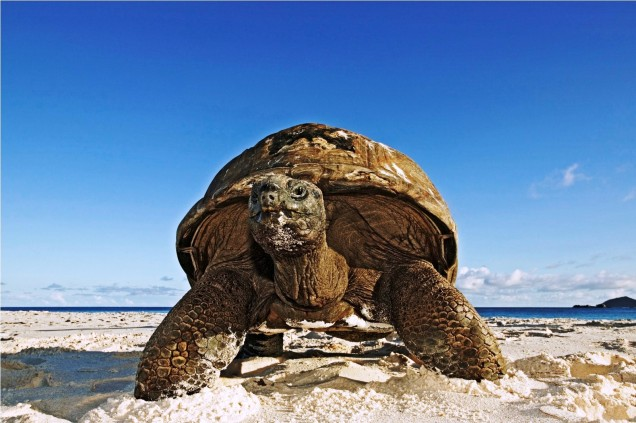 Гигантска костенурка на Сейшелските острови