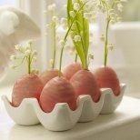 Момини сълзи във вази от яйца