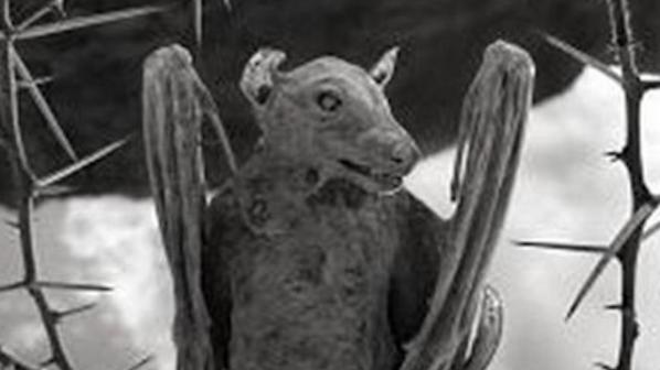 вкаменен прилеп от зловещото езеро