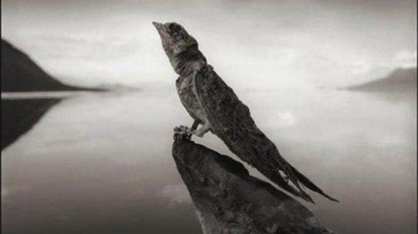 езеро вкаменило птица